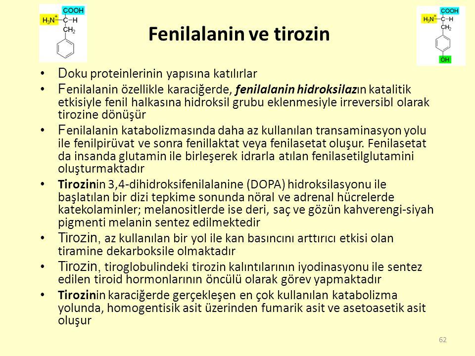 62 Fenilalanin ve tirozin D oku proteinlerinin yapısına katılırlar F enilalanin özellikle karaciğerde, fenilalanin hidroksilazın katalitik etkisiyle f