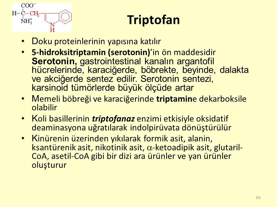 64 Triptofan D oku proteinlerinin yapısına katılır 5-hidroksitriptamin (serotonin)'in ön maddesidir Serotonin, gastrointestinal kanalın argantofil hüc