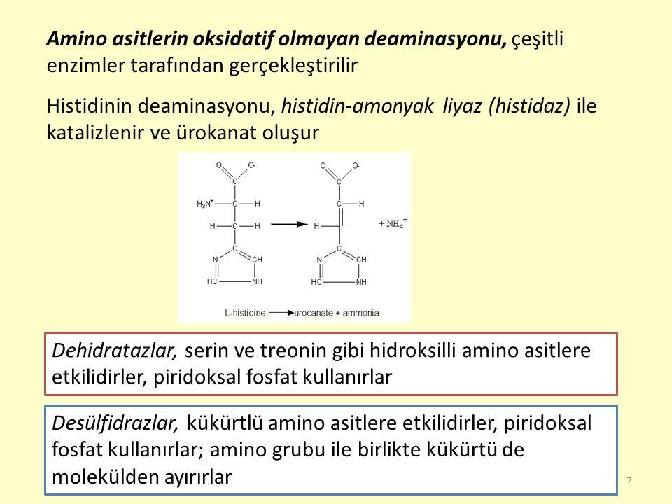 58 Histidin B irçok proteinde %1-2 oranında ve hemoglobinde %10 oranında bulunur  -alanin ile kaslarda bulunan karnozin (  -alanilhistidin) ve anserin (  - alanil-metilhistidin) dipeptitlerini oluşturur E ritrosit, beyin ve karaciğerde bulunan ergotionin, histidinin –SH türevidir M emeli dokularında histidin dekarboksilaz etkisiyle dekarboksile olur ve histamin oluşturur.