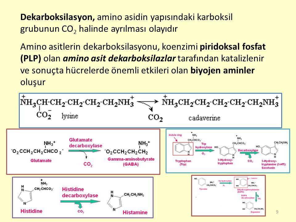 9 Dekarboksilasyon, amino asidin yapısındaki karboksil grubunun CO 2 halinde ayrılması olayıdır Amino asitlerin dekarboksilasyonu, koenzimi piridoksal