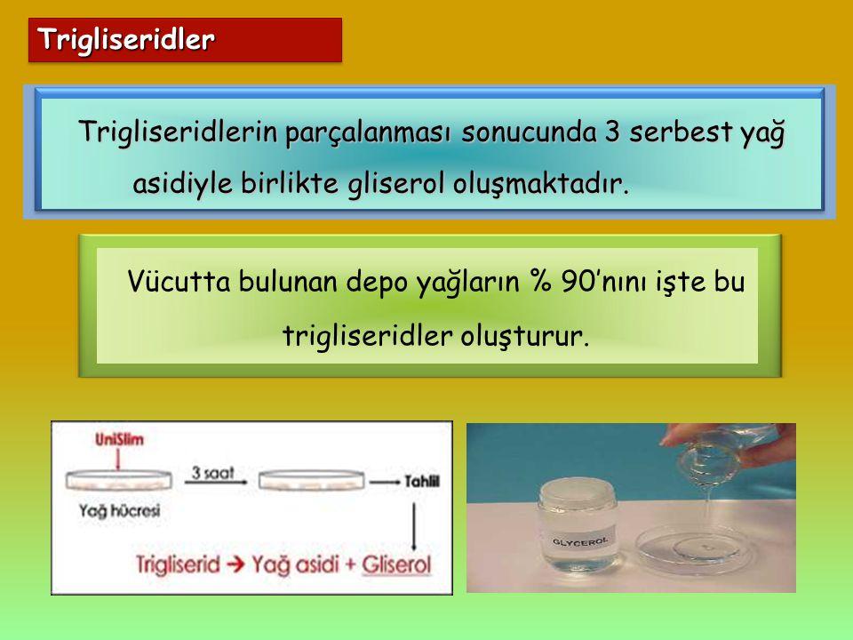 TrigliseridlerTrigliseridler Vücutta bulunan depo yağların % 90'nını işte bu trigliseridler oluşturur. Trigliseridlerin parçalanması sonucunda 3 serbe