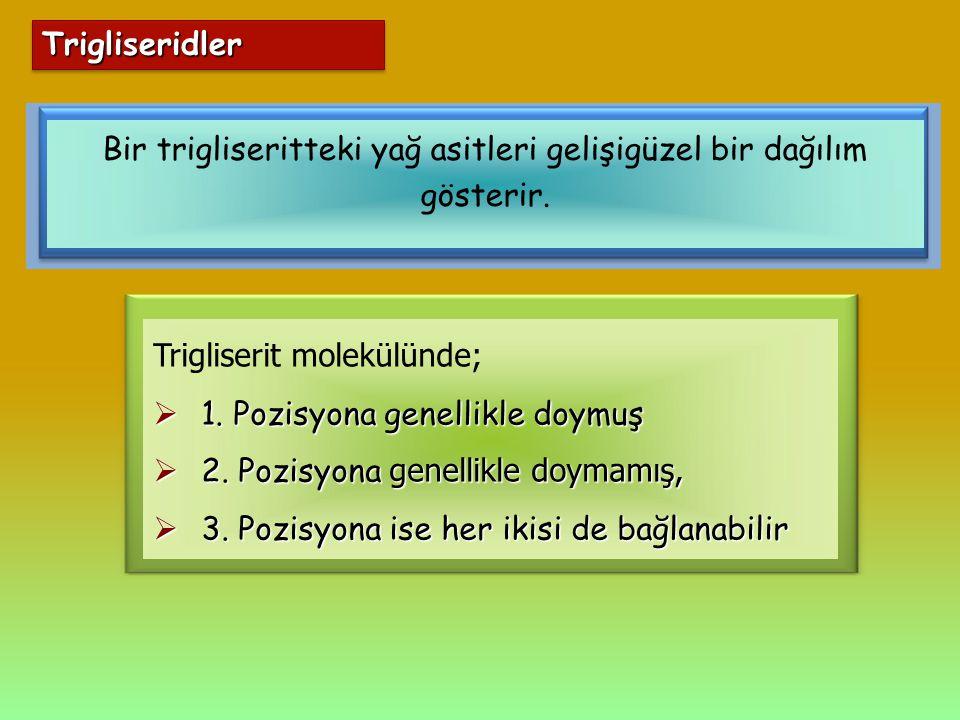 TrigliseridlerTrigliseridler Bir trigliseritteki yağ asitleri gelişigüzel bir dağılım gösterir. Trigliserit molekülünde;  1. Pozisyona genellikle doy