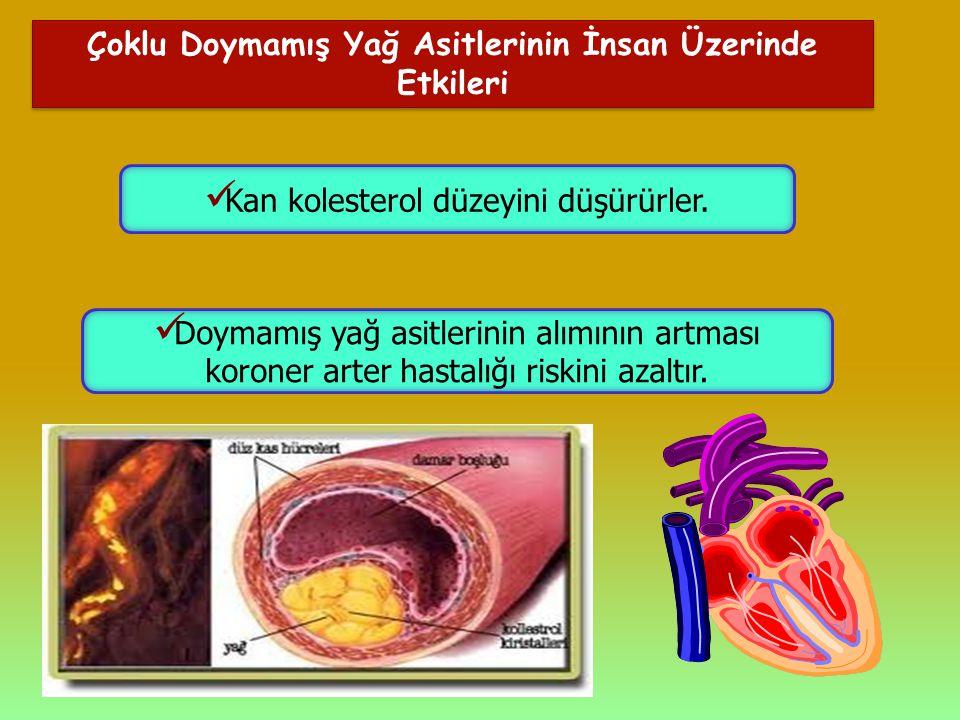 Çoklu Doymamış Yağ Asitlerinin İnsan Üzerinde Etkileri Kan kolesterol düzeyini düşürürler. Doymamış yağ asitlerinin alımının artması koroner arter has