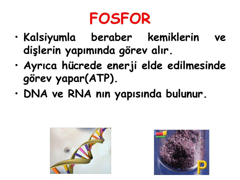 FOSFOR Kalsiyumla beraber kemiklerin ve dişlerin yapımında görev alır. Ayrıca hücrede enerji elde edilmesinde görev yapar(ATP). DNA ve RNA nın yapısın