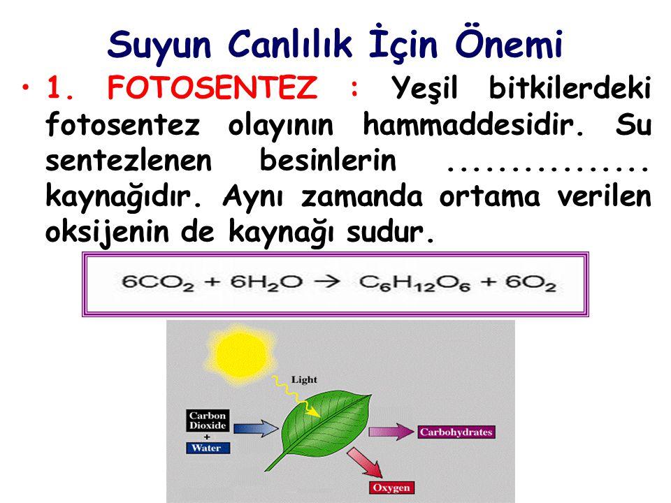 Suyun Canlılık İçin Önemi 1. FOTOSENTEZ : Yeşil bitkilerdeki fotosentez olayının hammaddesidir. Su sentezlenen besinlerin................ kaynağıdır.