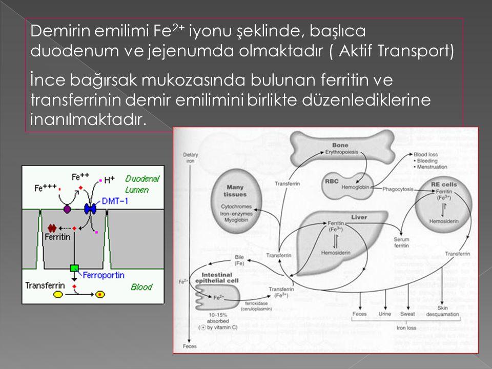 Demirin emilimi Fe 2+ iyonu şeklinde, başlıca duodenum ve jejenumda olmaktadır ( Aktif Transport) İnce bağırsak mukozasında bulunan ferritin ve transf