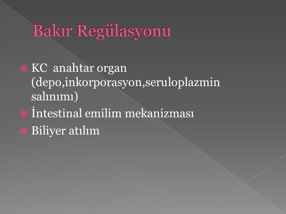  KC anahtar organ (depo,inkorporasyon,seruloplazmin salınımı)  İntestinal emilim mekanizması  Biliyer atılım