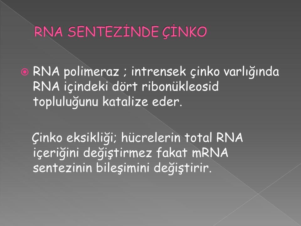  RNA polimeraz ; intrensek çinko varlığında RNA içindeki dört ribonükleosid topluluğunu katalize eder. Çinko eksikliği; hücrelerin total RNA içeriğin