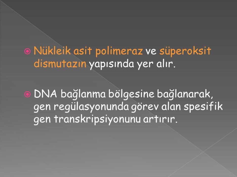  Nükleik asit polimeraz ve süperoksit dismutazın yapısında yer alır.  DNA bağlanma bölgesine bağlanarak, gen regülasyonunda görev alan spesifik gen