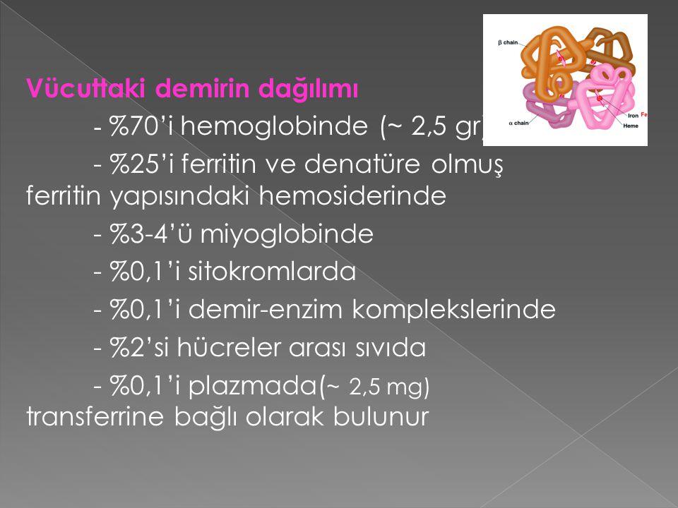 Vücuttaki demirin dağılımı - %70'i hemoglobinde (~ 2,5 gr) - %25'i ferritin ve denatüre olmuş ferritin yapısındaki hemosiderinde - %3-4'ü miyoglobinde