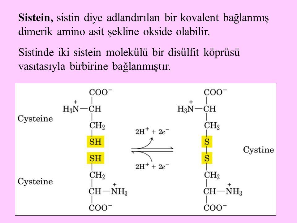 13 Sistein, sistin diye adlandırılan bir kovalent bağlanmış dimerik amino asit şekline okside olabilir. Sistinde iki sistein molekülü bir disülfit köp