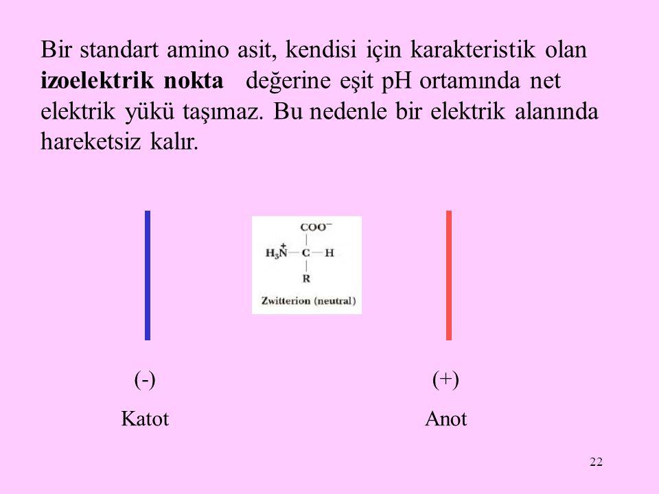 22 Bir standart amino asit, kendisi için karakteristik olan izoelektrik nokta değerine eşit pH ortamında net elektrik yükü taşımaz. Bu nedenle bir ele