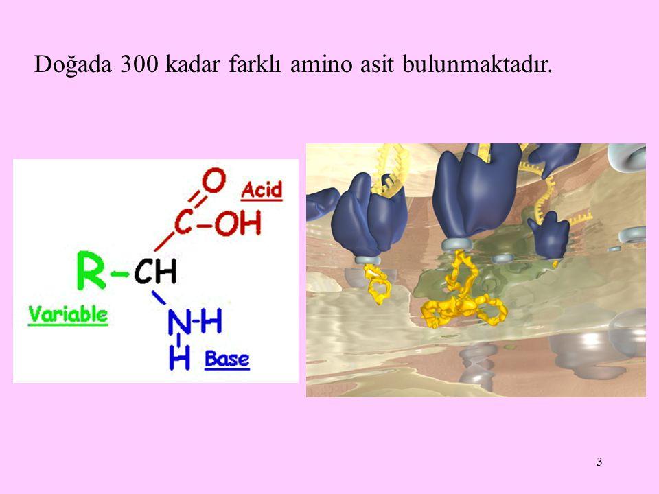 3 Doğada 300 kadar farklı amino asit bulunmaktadır.