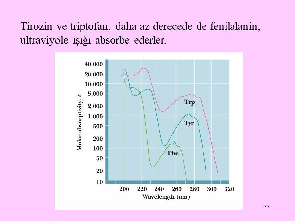 33 Tirozin ve triptofan, daha az derecede de fenilalanin, ultraviyole ışığı absorbe ederler.