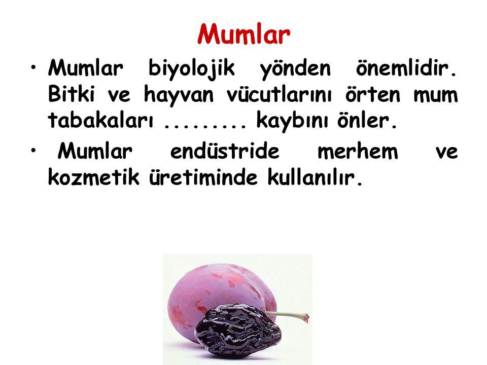 Mumlar Mumlar biyolojik yönden önemlidir.Bitki ve hayvan vücutlarını örten mum tabakaları.........