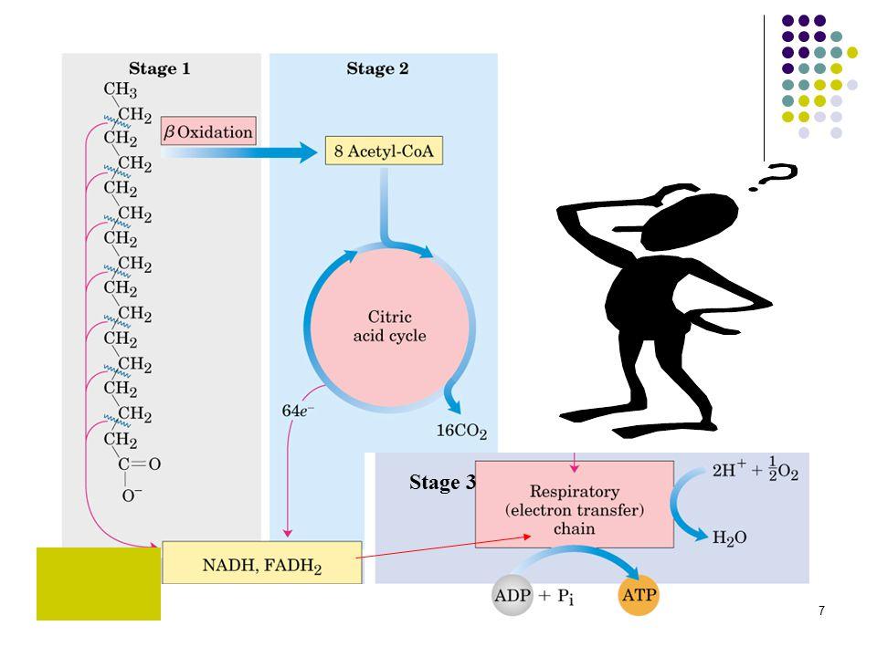 8 Lipoliz, hormona duyarlı triaçilgliserol lipaz tarafından katalizlenir ve düzenlenir.
