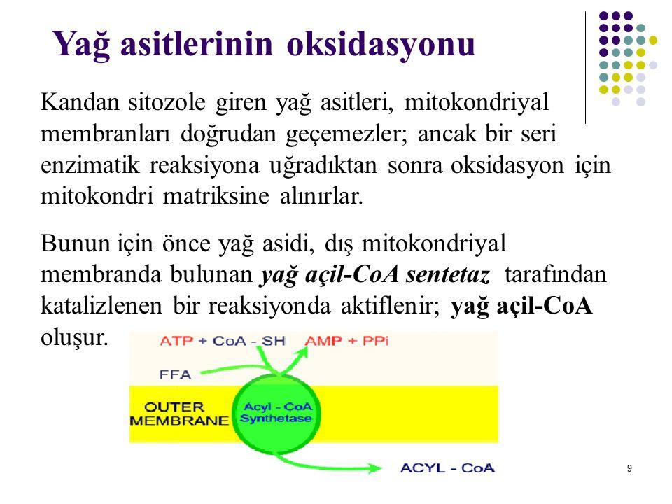 20 Yağ asitlerinin  oksidasyonunun açıklanan bu dört reaksiyonunun tekrarlanmasıyla yağ asidi tamamen asetil- CoA'lara yıkılmış olur.