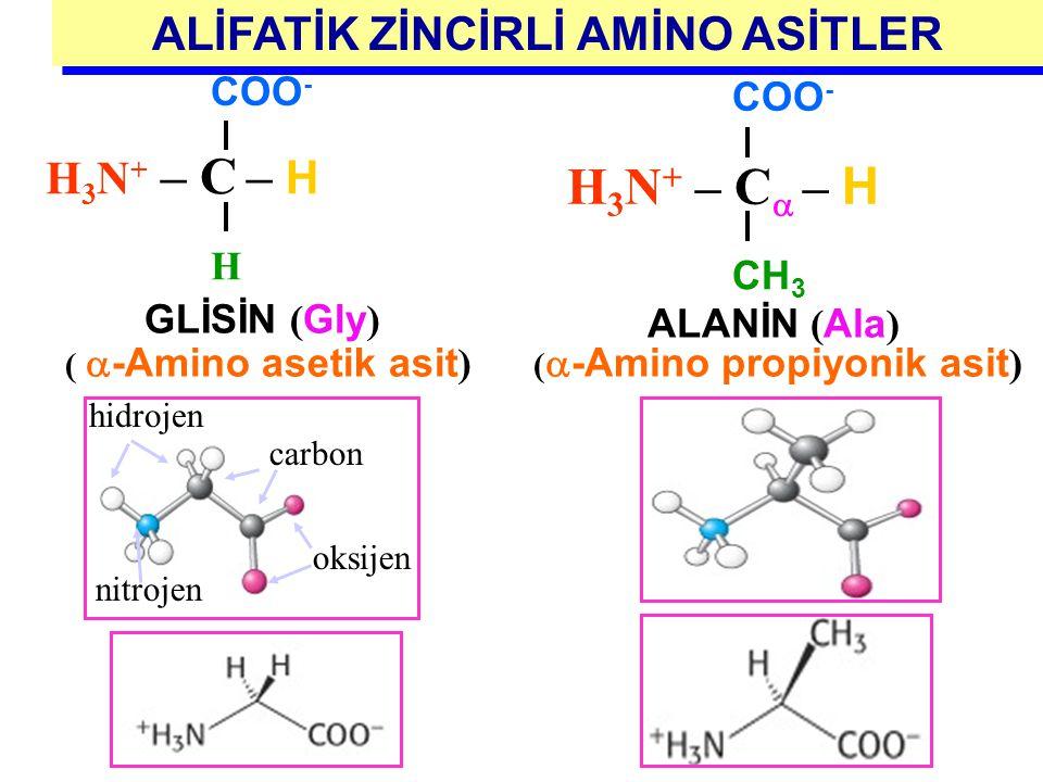 ALİFATİK ZİNCİRLİ AMİNO ASİTLER Dallanmış zincirli Siklik ? 1- Glisin ( GLY) ( G) 2-Alanin ( ALA) (A) 3- Valin ( VAL) (V) 4- Lösin ( LEU) ( L) 5- İzol