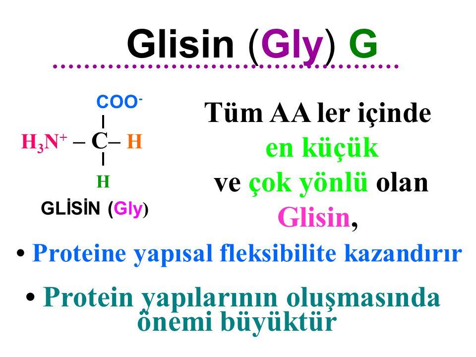 GLİSİN ( Gly ) (  -Amino asetik asit ) H 3 N + – C – H COO - H ALİFATİK ZİNCİRLİ AMİNO ASİTLER COO - H 3 N + – C  – H CH 3 ALANİN ( Ala ) (  -Amino