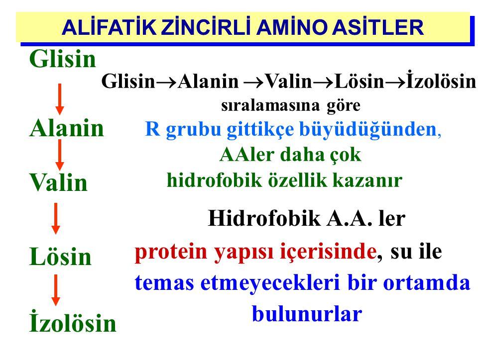 ALİFATİK ZİNCİRLİ AMİNO ASİTLER CH 3 H 3 N + – C  – H COO - CH VALİN ( Val ) (  -Amino izovalerik asit) H 3 N + – C  – H COO - H –C  – CH 3 CH 2 C