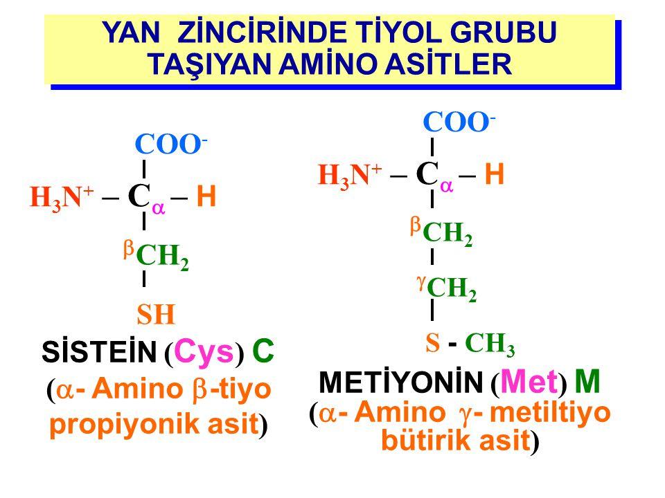 YAN ZİNCİRİNDE HİDROKSİL GRUBU TAŞIYAN AMİNO ASİTLER SERİN ( Ser ) S (  -Amino  - hidroksi propiyonik asit ) H 3 N + – C  – H COO -  CH 2 OH TREON