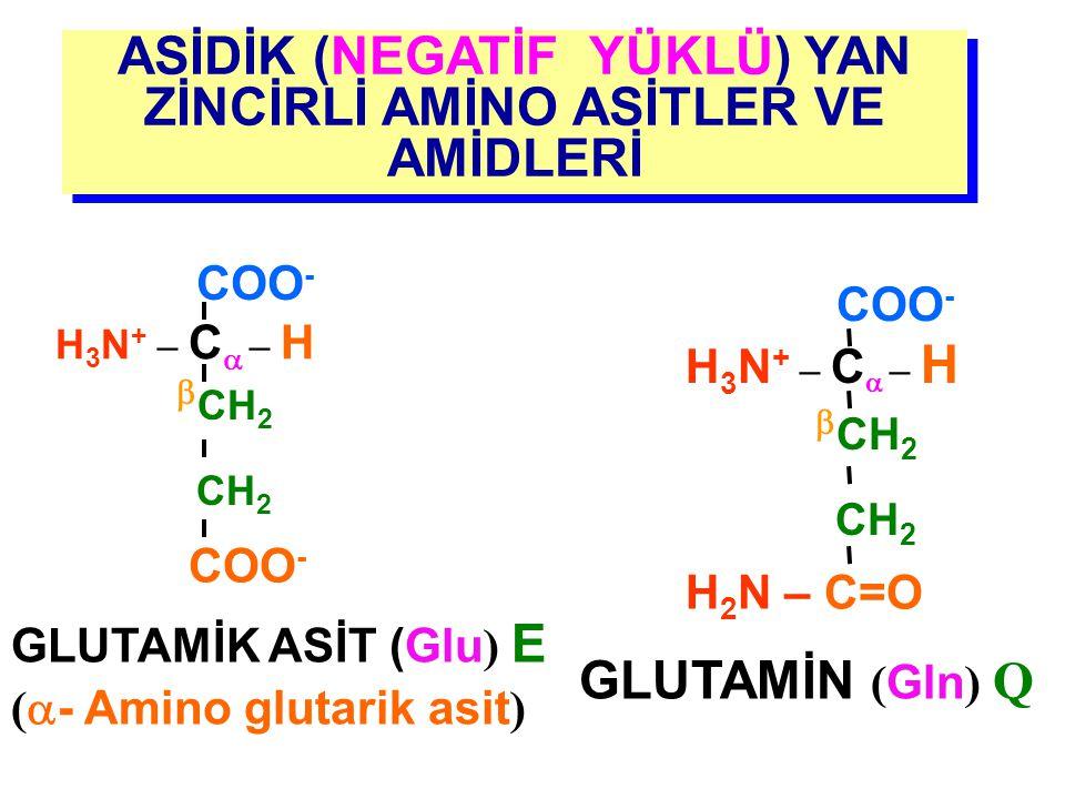 ASİDİK (NEGATİF YÜKLÜ) YAN ZİNCİRLİ AMİNO ASİTLER VE AMİDLERİ ASPARAJİN ( Asn ) N H 3 N + – C  – H COO -  CH 2 H 2 N – C =O ASPARTİK ASİT ( Asp ) D