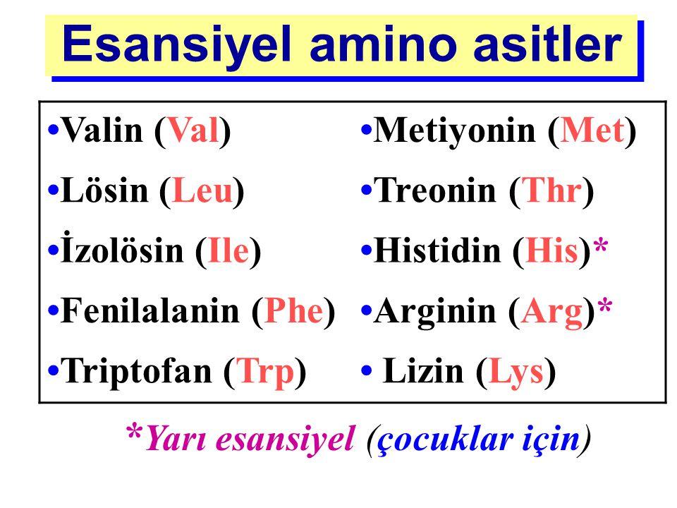 STANDART AMİNO ASİTLER Besin değerlerine göre 2 gruba ayrılırlar Esansiyel amino asitler: Maksimum büyümeyi sağlamak için organizmada yeterli miktarda