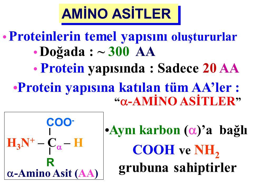 AMİNO ASİTLERİN ADLANDIRILMASI Amino Asitler: - Özel isimler (Glisin) - Üç harflik kısaltmalar (Gly) - Tek büyük harften oluşan semboller (G) ile göst