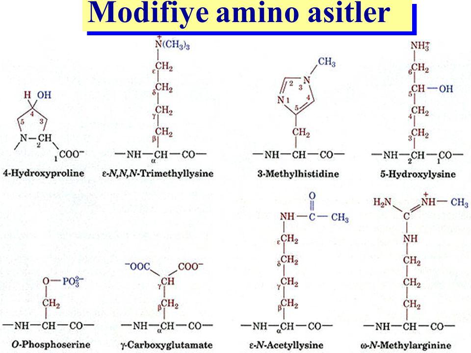 Modifiye amino asitler Kazein, bir çok enzim o-FosfoserinSerin Enzim (glutatyon peroksidaz) Selenosistein Serin Bir çok enzim Asetilserin Serin Protro