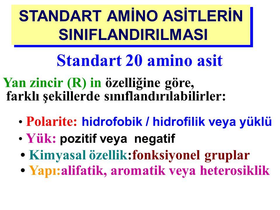 AMİNO ASİTLERİN SINIFLANDIRILMASI Protein yapısına giren amino asitler: Standart (primer, normal) Standart olmayan amino asitler: - Modifiye amino asi