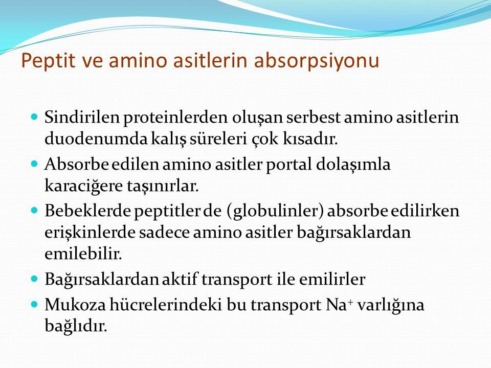 Peptit ve amino asitlerin absorpsiyonu Sindirilen proteinlerden oluşan serbest amino asitlerin duodenumda kalış süreleri çok kısadır. Absorbe edilen a