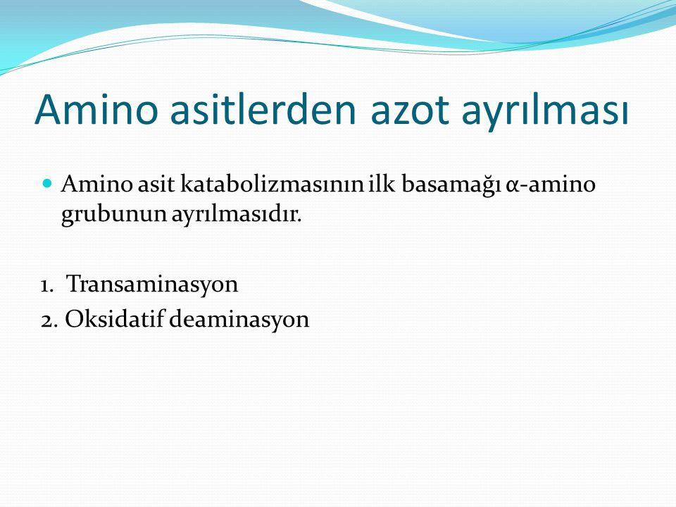 Amino asitlerden azot ayrılması Amino asit katabolizmasının ilk basamağı α-amino grubunun ayrılmasıdır. 1. Transaminasyon 2. Oksidatif deaminasyon