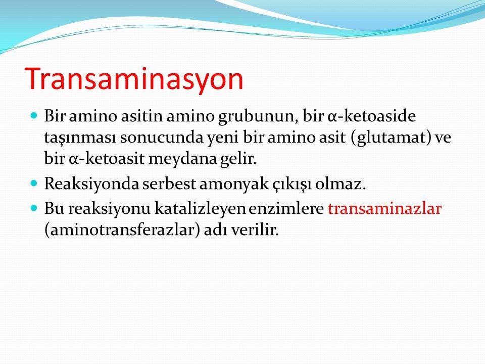 Transaminasyon Bir amino asitin amino grubunun, bir α-ketoaside taşınması sonucunda yeni bir amino asit (glutamat) ve bir α-ketoasit meydana gelir.