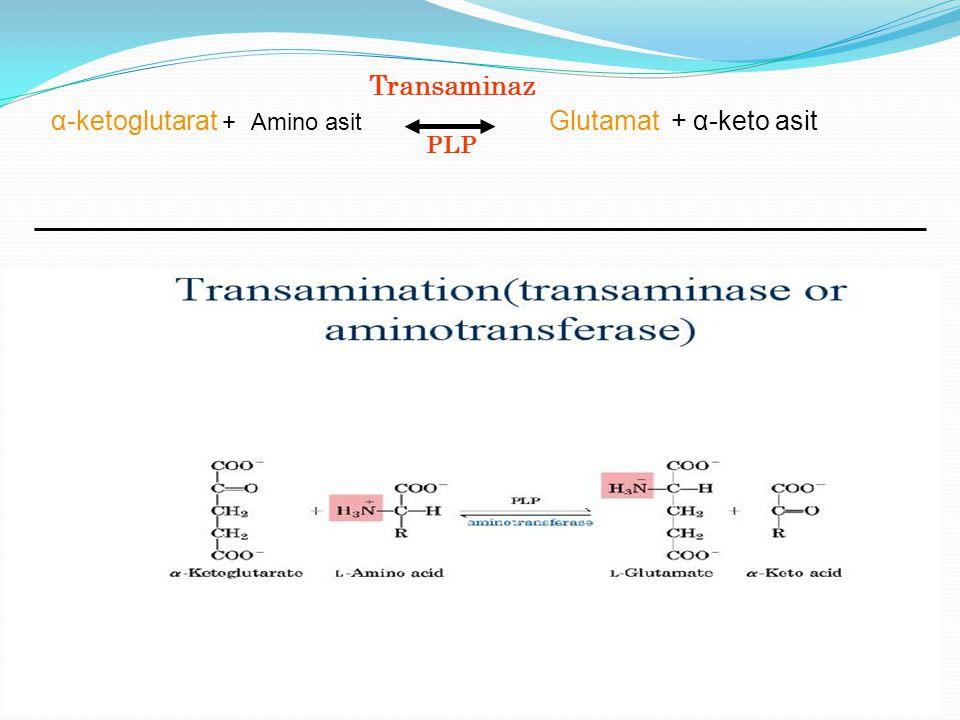 Transaminaz PLP α-ketoglutarat + Amino asit Glutamat + α-keto asit