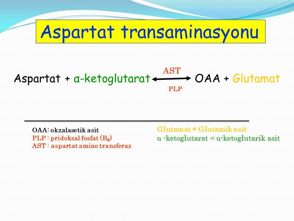 OAA: okzalasetik asit PLP : pridoksal fosfat (B 6 ) AST : aspartat amino transferaz Aspartat + α-ketoglutarat OAA + Glutamat AST Glutamat = Glutamik asit α -ketoglutarat = α-ketoglutarik asit PLP Aspartat transaminasyonu