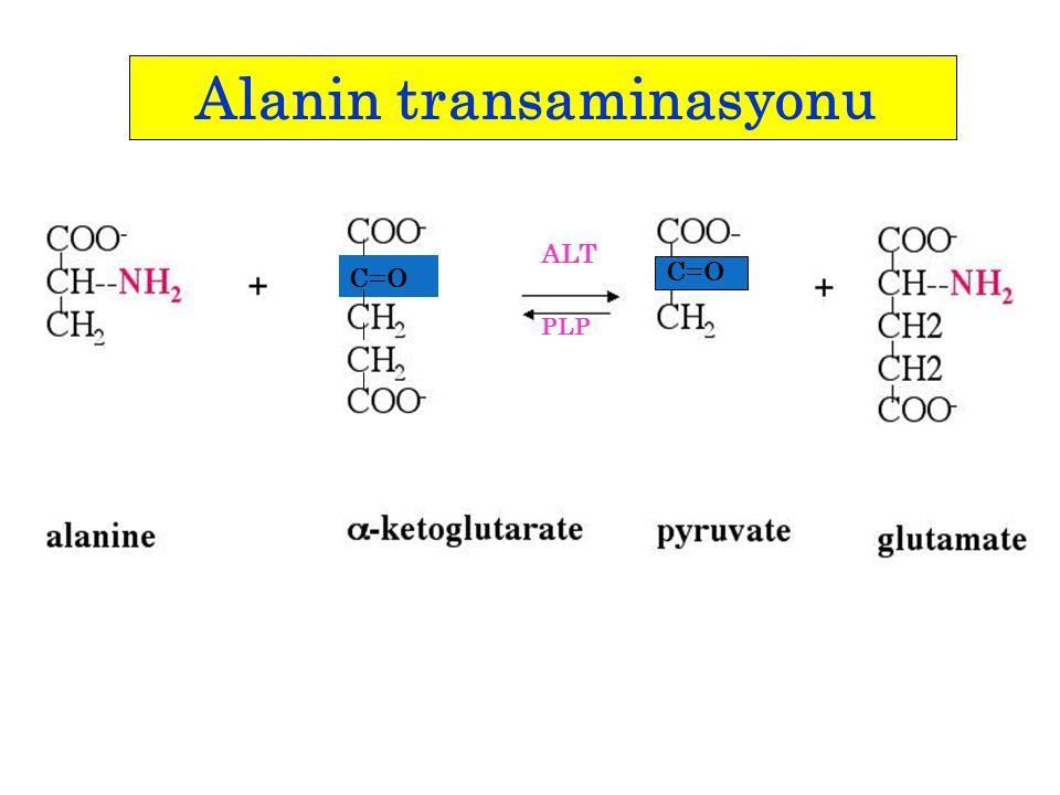 C=O ALT PLP Alanin transaminasyonu