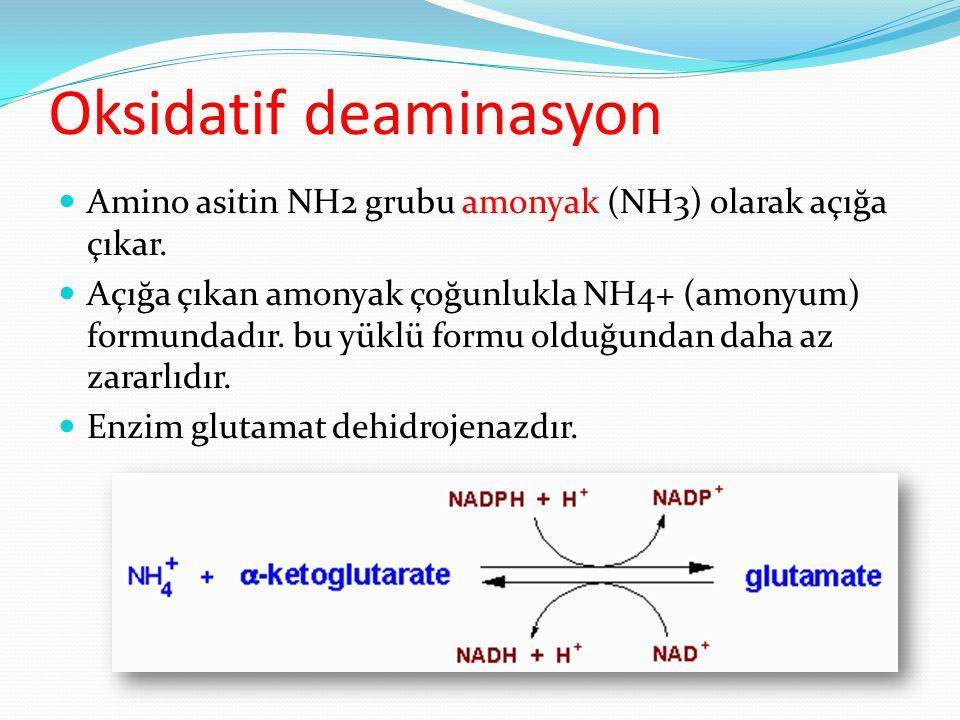 Oksidatif deaminasyon Amino asitin NH2 grubu amonyak (NH3) olarak açığa çıkar. Açığa çıkan amonyak çoğunlukla NH4+ (amonyum) formundadır. bu yüklü for