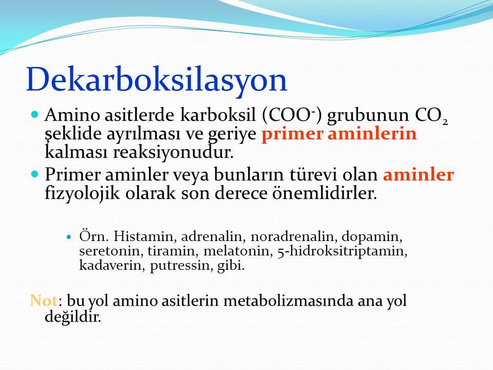 Dekarboksilasyon Amino asitlerde karboksil (COO - ) grubunun CO 2 şeklide ayrılması ve geriye primer aminlerin kalması reaksiyonudur.