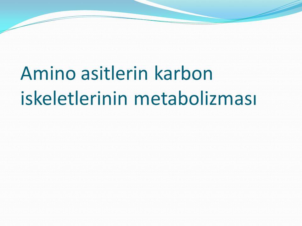 Amino asitlerin karbon iskeletlerinin metabolizması