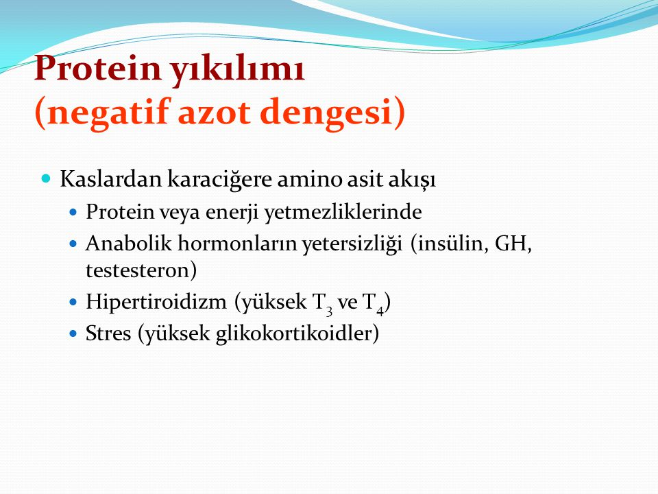 Protein yıkılımı (negatif azot dengesi) Kaslardan karaciğere amino asit akışı Protein veya enerji yetmezliklerinde Anabolik hormonların yetersizliği (insülin, GH, testesteron) Hipertiroidizm (yüksek T 3 ve T 4 ) Stres (yüksek glikokortikoidler)