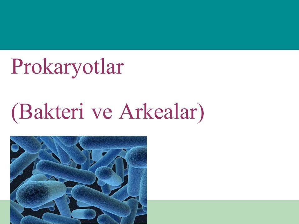 Oksijenin metobolizmadaki rolü Zorunlu aeroblar – Oksijene gerek var Fakültatif anaeroblar – Oksijenli yada –siz ortamda yaşayabilir Zorunlu anaeroblar – Oksijenli ortam yaşayamaz