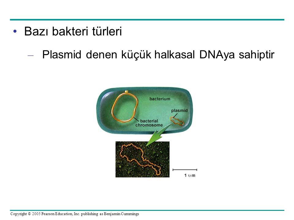 Copyright © 2005 Pearson Education, Inc. publishing as Benjamin Cummings Bazı bakteri türleri – Plasmid denen küçük halkasal DNAya sahiptir