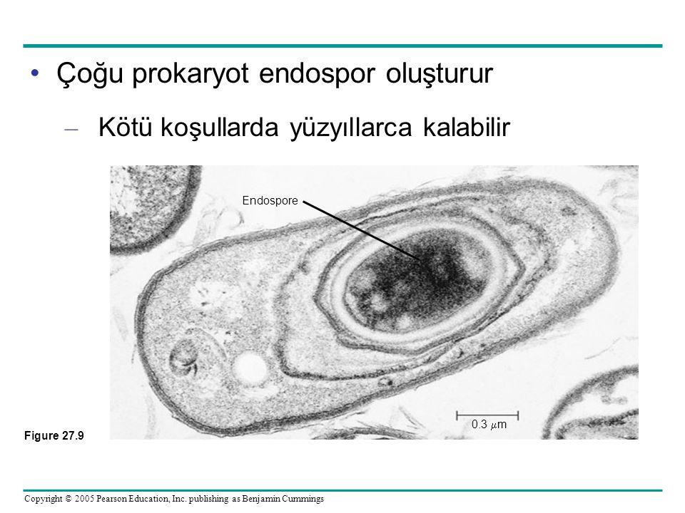Copyright © 2005 Pearson Education, Inc. publishing as Benjamin Cummings Çoğu prokaryot endospor oluşturur – Kötü koşullarda yüzyıllarca kalabilir End