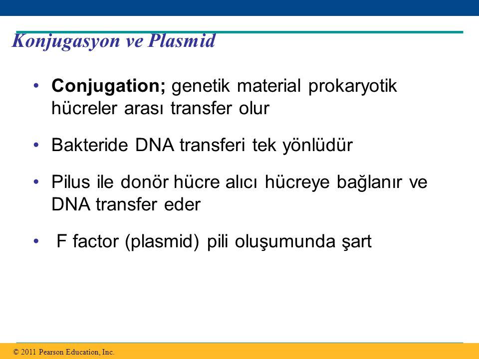 Copyright © 2005 Pearson Education, Inc. publishing as Benjamin Cummings Konjugasyon ve Plasmid Conjugation; genetik material prokaryotik hücreler ara