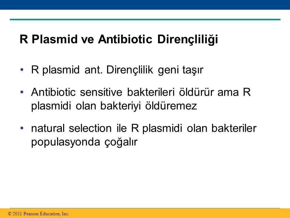 Copyright © 2005 Pearson Education, Inc. publishing as Benjamin Cummings R Plasmid ve Antibiotic Dirençliliği R plasmid ant. Dirençlilik geni taşır An