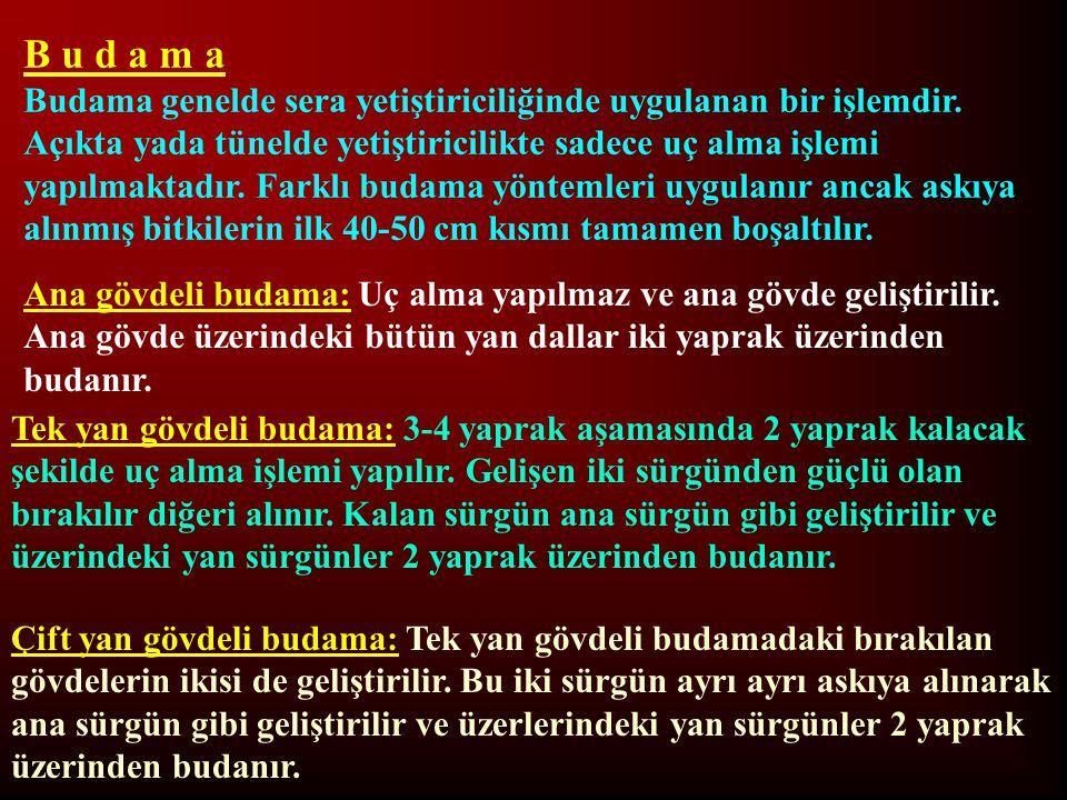 B u d a m a Budama genelde sera yetiştiriciliğinde uygulanan bir işlemdir. Açıkta yada tünelde yetiştiricilikte sadece uç alma işlemi yapılmaktadır. F