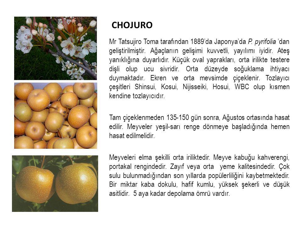 CHOJURO Mr Tatsujiro Toma tarafından 1889'da Japonya'da P.