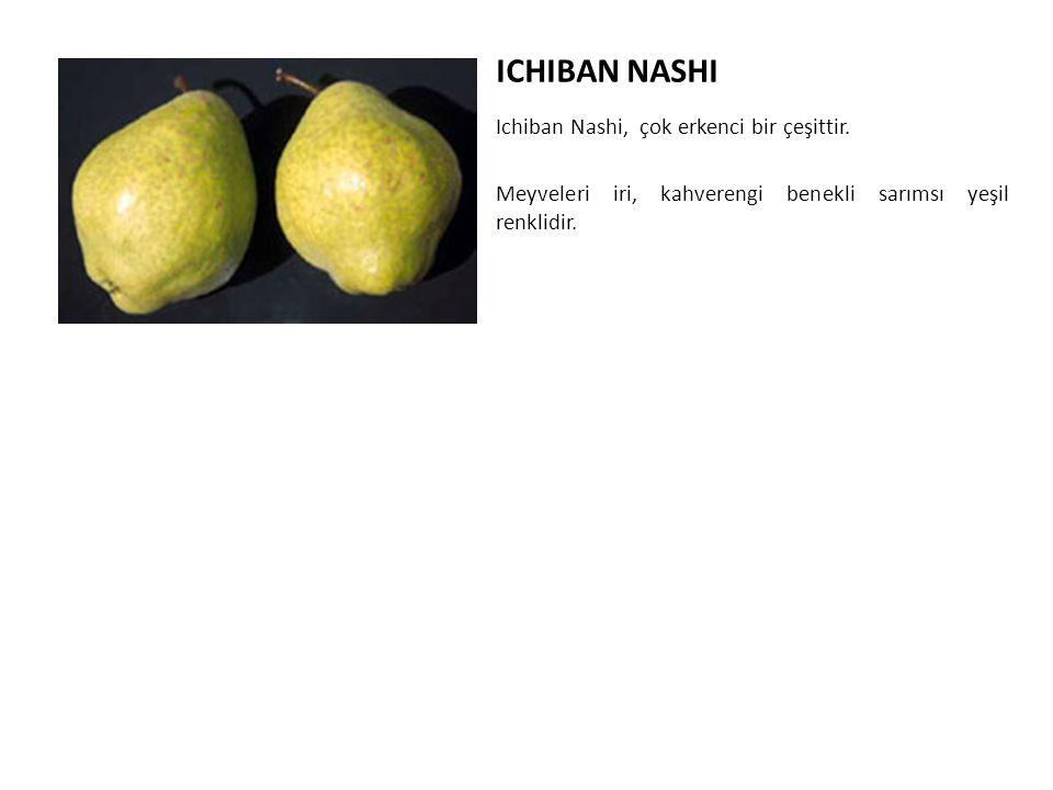 ICHIBAN NASHI Ichiban Nashi, çok erkenci bir çeşittir.
