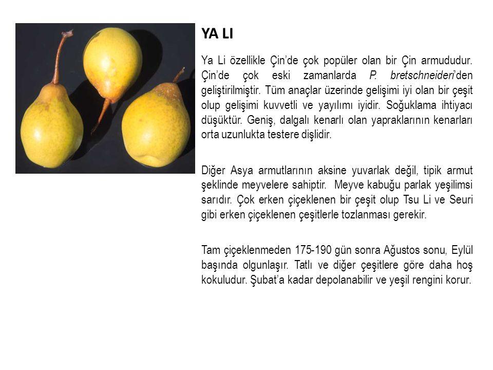 YA LI Ya Li özellikle Çin'de çok popüler olan bir Çin armududur.