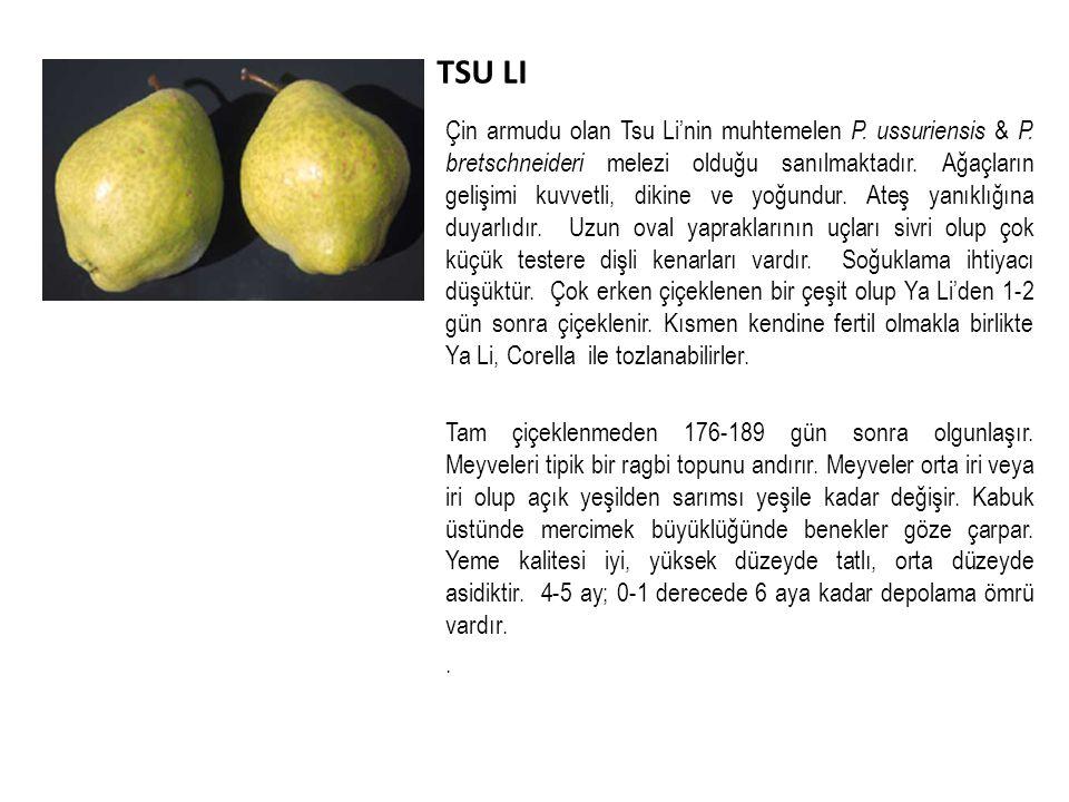 TSU LI Çin armudu olan Tsu Li'nin muhtemelen P.ussuriensis & P.